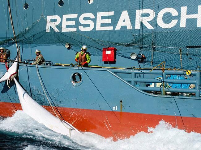 gen-baleias