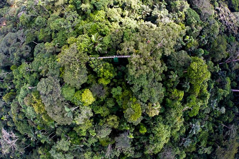 22042015-floresta-drone