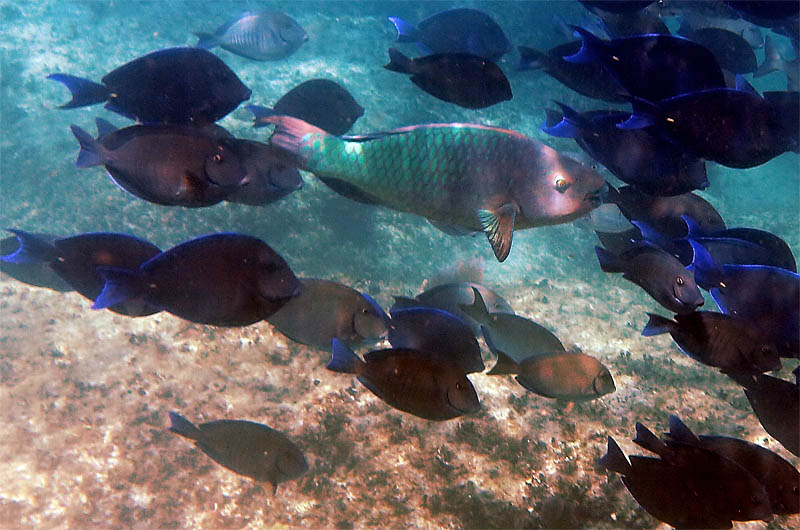 Peixes em extinção