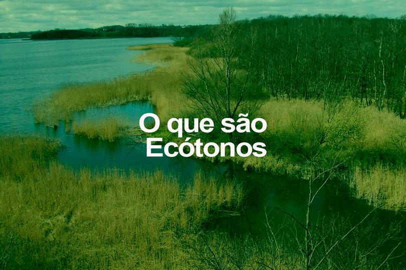 o-q-sao-ecotonos