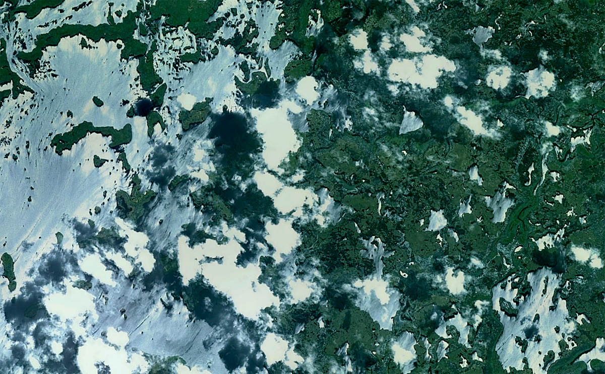 Pantanal - MT