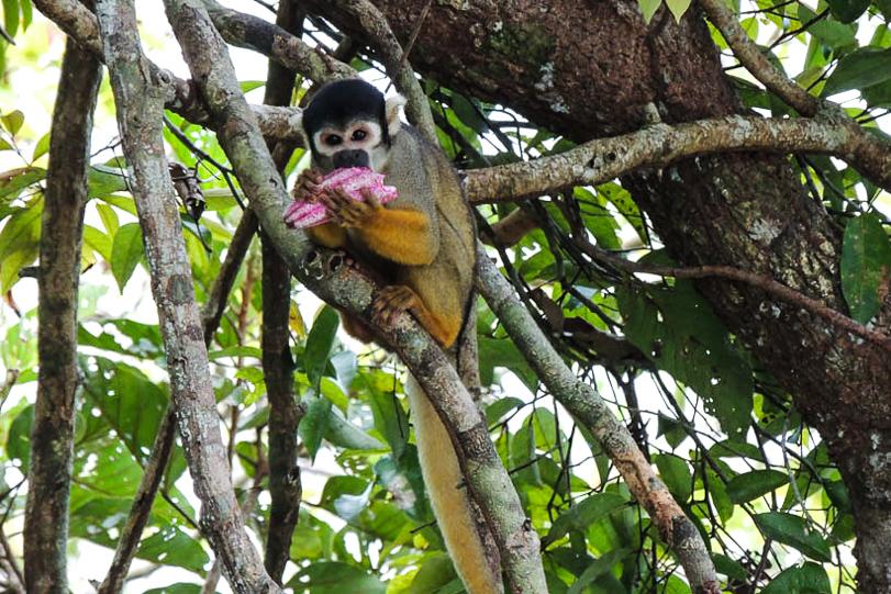 07062014-mico-de-cheiro-de-cabeca-preta
