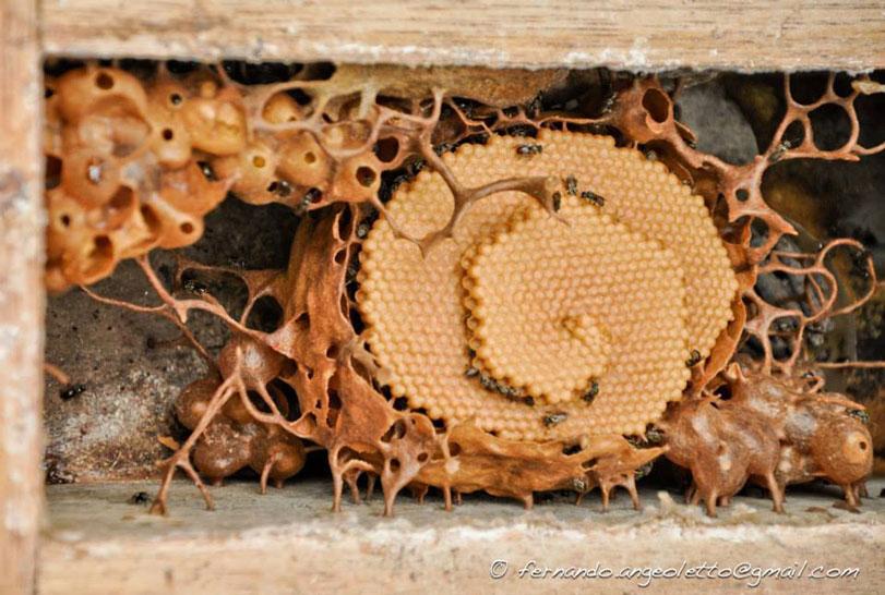 mel-de-abelha-nativa