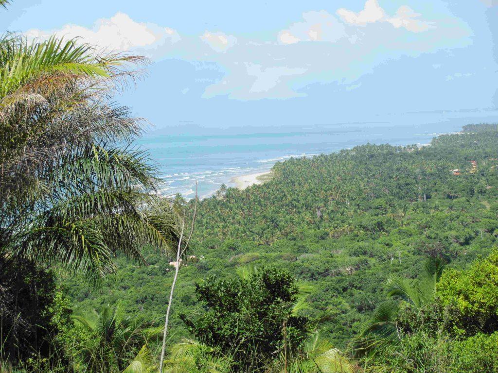 Mata Atlântica preservada, litoral paradisíaco. Ambos ameaçados pelo Porto Sul (foto: Suzana Pádua)