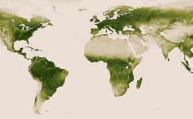 A vegetação do planeta vista do espaço