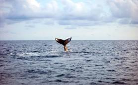 brasilia-olhe-para-o-mar-e-o-proteja-da-degradacao-chamada