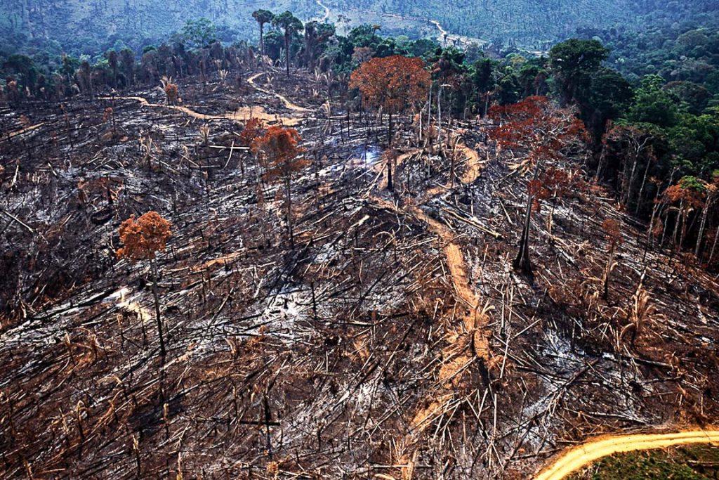 Área de desmate recente na Amazônia. Foto: Araquém Alcântara/Imazon