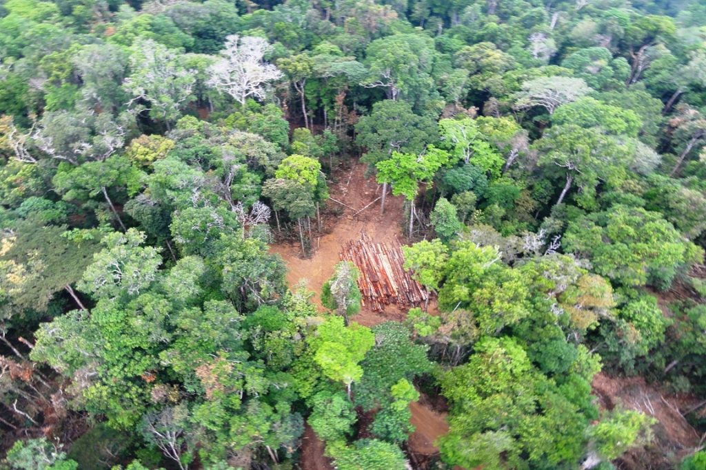Exploração de madeira no interior da reserva. Desmatamento ilegal está acabando com o que sobrou da floresta amazônica no Maranhão. Foto: Nelson Feitosa/Ascom Ibama/PA.