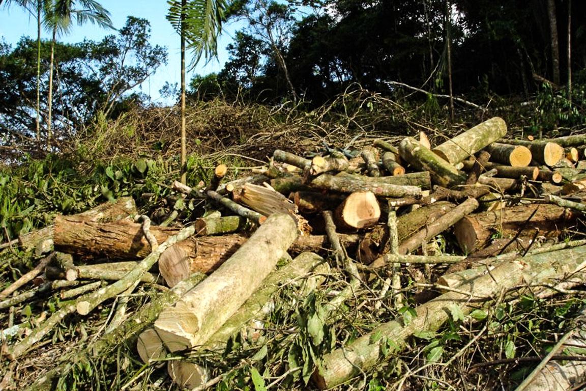 Infoamazonia: Maior em 6 anos, número de alertas de desmatamento cresce 68% em 2015