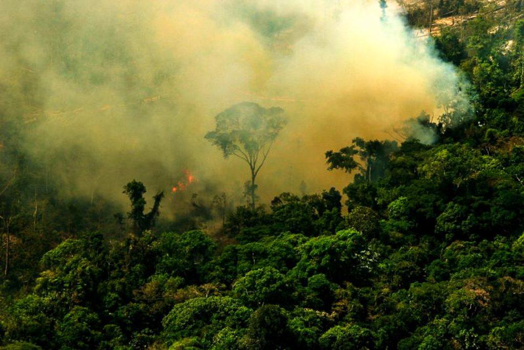 Queimada na FLONA do Jamanxim. Novo Progresso, Pará. Foto: Leonardo Freitas