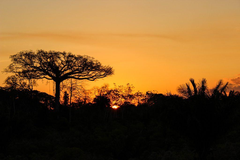 Pôr do sol na Reserva Extrativista Chico Mendes, no Acre. Foto: Nanda Melonio