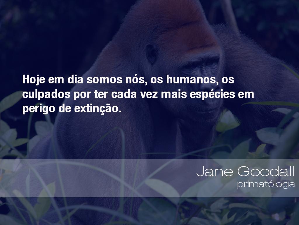 Hoje em dia somos nós, os humanos, os culpados por ter cada vez mais espécies em perigo de extinção. - Jane Goodall, primatóloga