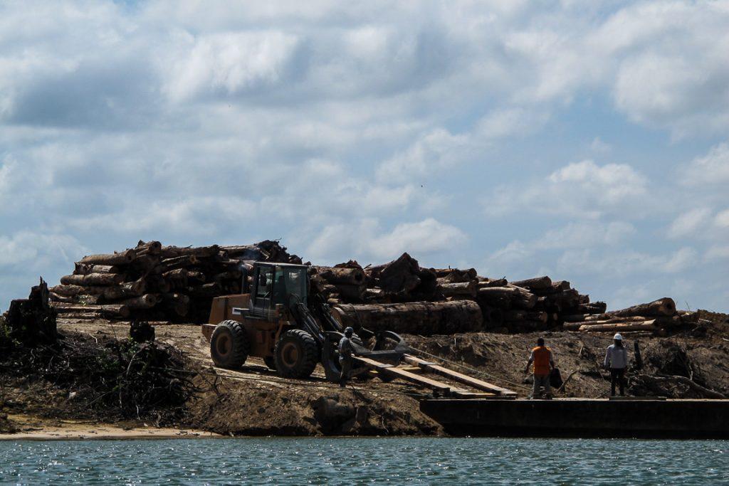 Por determinação do licenciamento, antes do enchimento do reservatório, as ilhas do Xingu devem ser desmatadas. Foto: Gustavo Faleiros