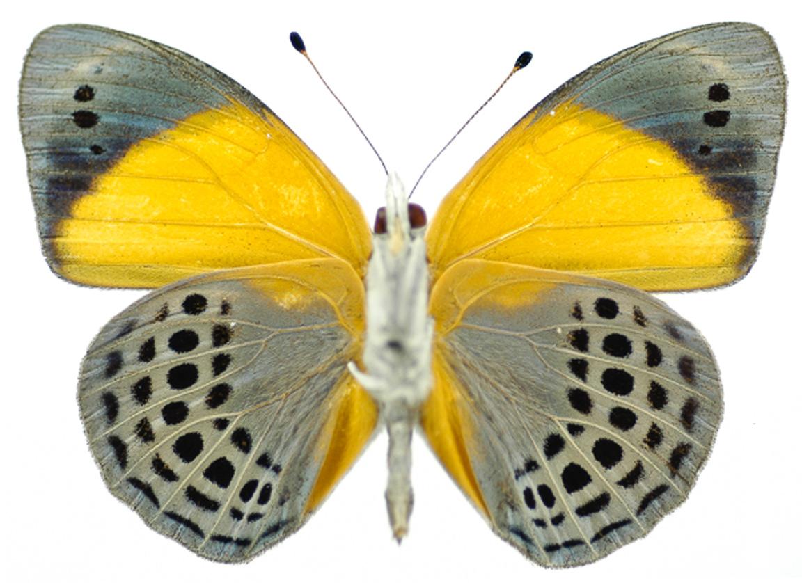 14102015-checa-borboletas-2
