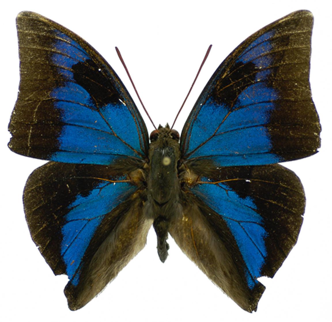 14102015-checa-borboletas-3