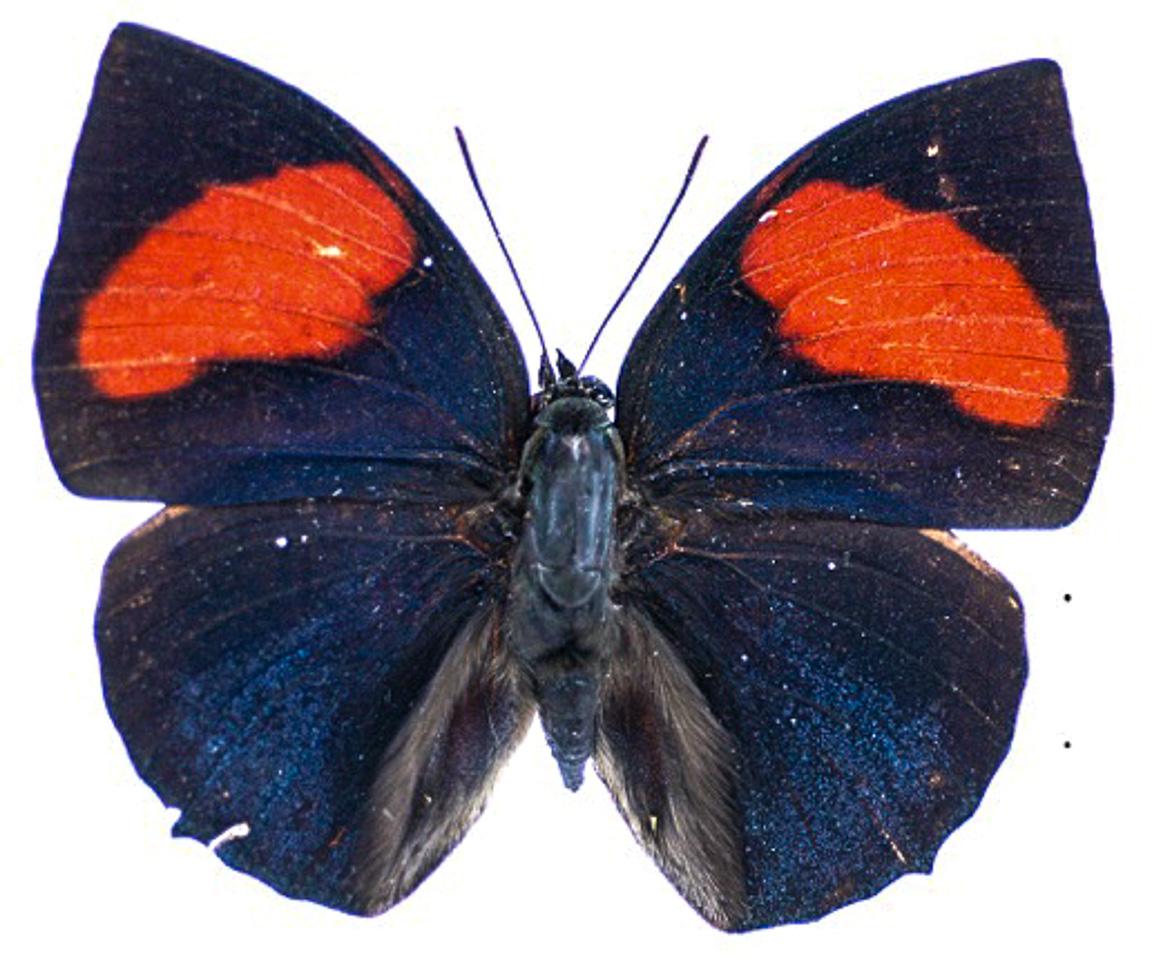 14102015-checa-borboletas-4