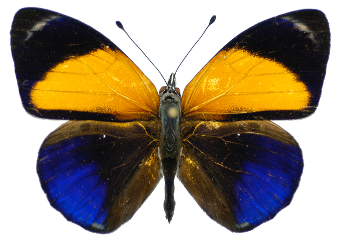 14102015-checa-borboletas