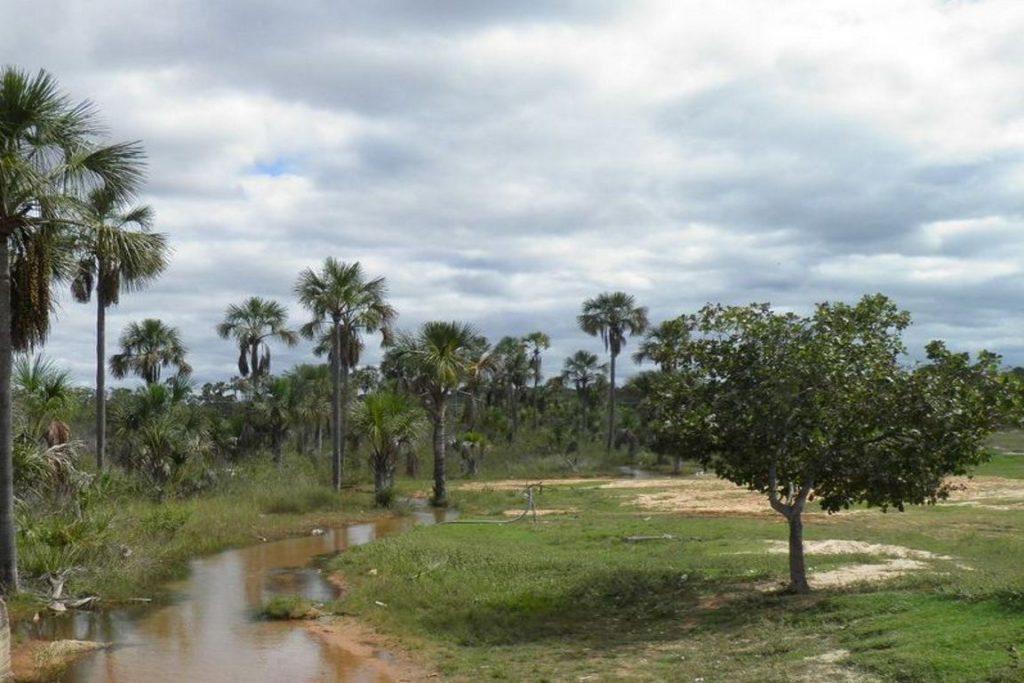Parque Nacional Grande Sertão Veredas. Foto: Cíntia Abruzzini/wikiparques.