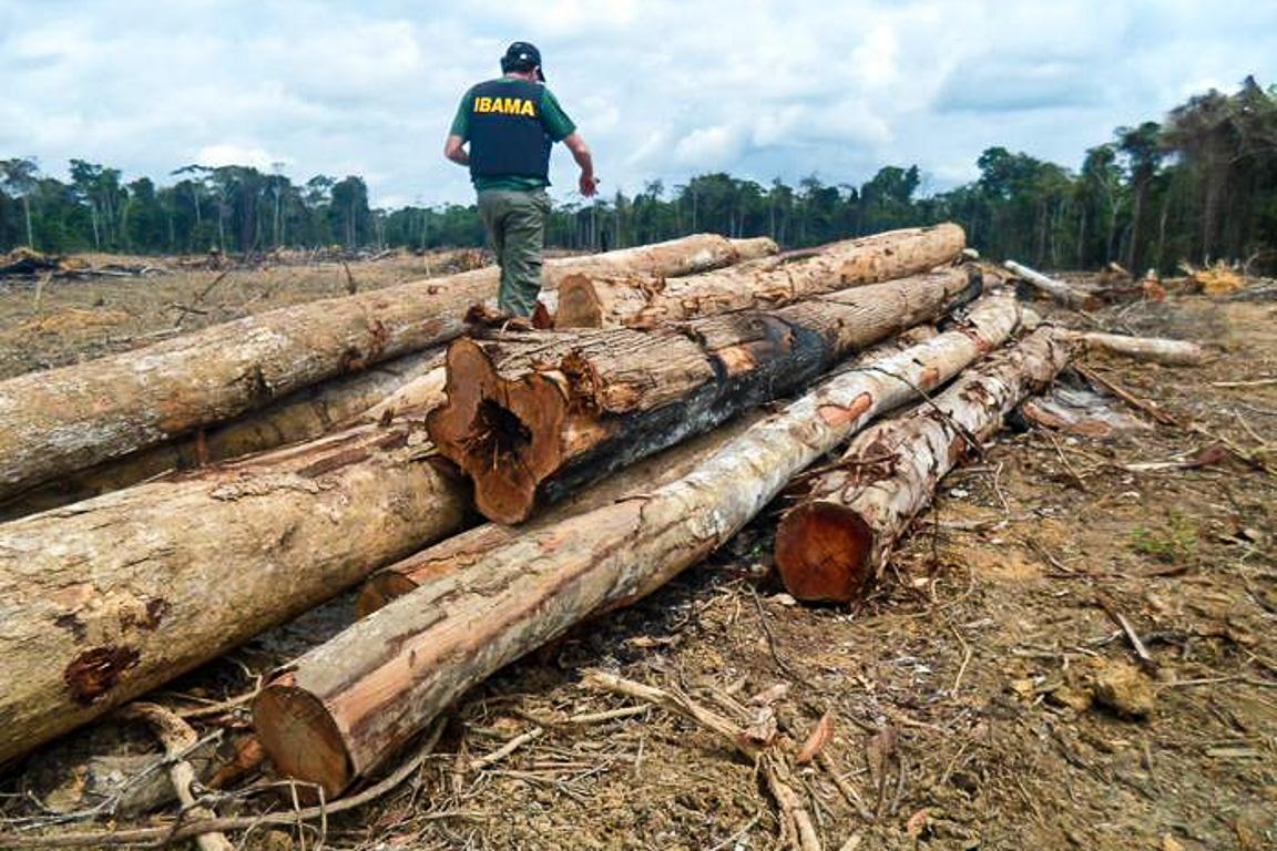 Fato inédito, desmatamento na Amazônia cresce mesmo com recessão econômica