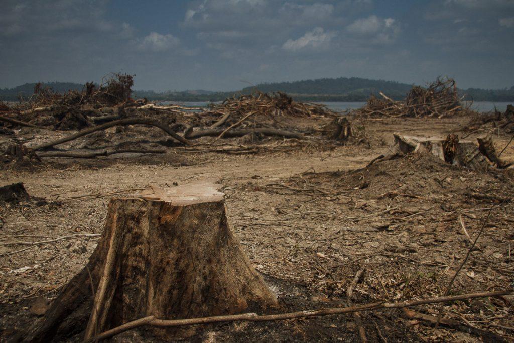 Ao invés de aproveitar as árvores desmatadas para a área onde será criado o lago, a usina compra madeira irregular. Foto: Marcio Isensee e Sá