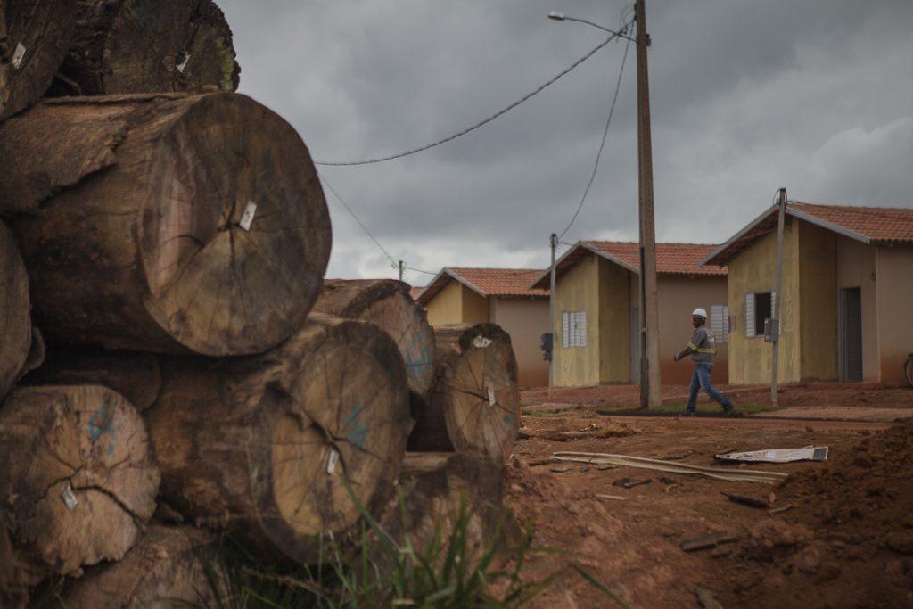 Árvores, entre elas castanheiras, foram derrubadas para a construção de um reassentamento e abandonadas