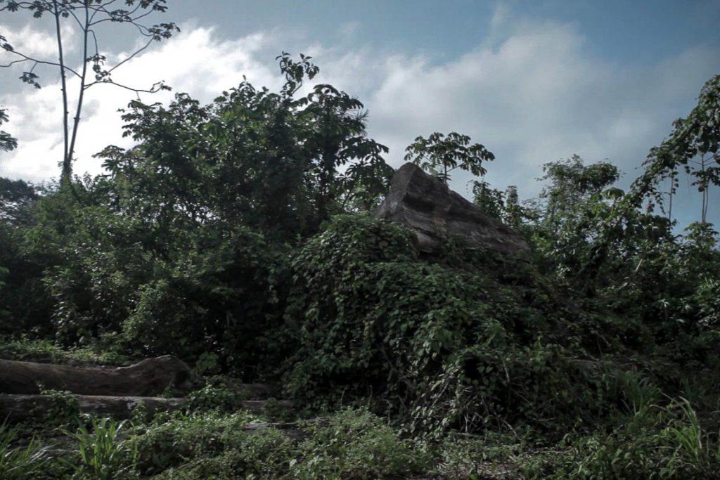 Pátio de Belo Monte com toras abandonadas há tanto tempo que a vegetação já cobre a pilha. Foto: Marcio Isensee e Sá