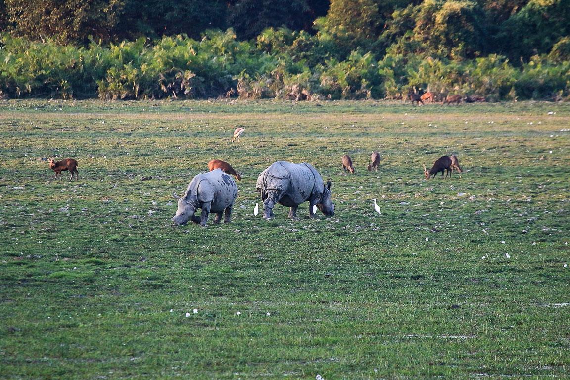 O visual da rodovia que leva de Guwahati, capital do Assam, a Kaziranga: rinocerontes, cervos e aves na beira da estrada, separados desta por uma cerca elétrica.