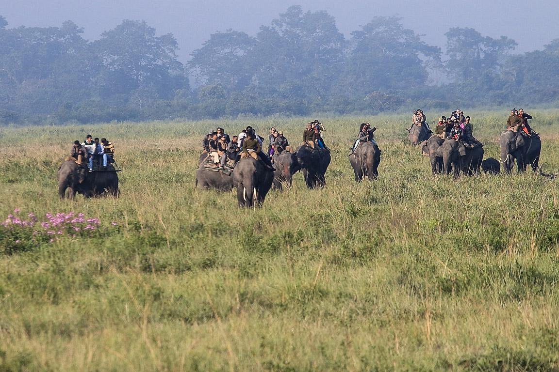 Turistas em um passeio matinal carregados por elefantes escravos.
