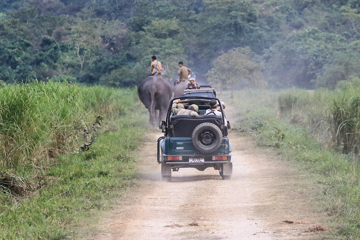 Turistas nos seus jipes e guarda-parques nos seus elefantes.