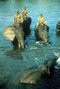 Banho dos elefantes, um ritual muito importante.