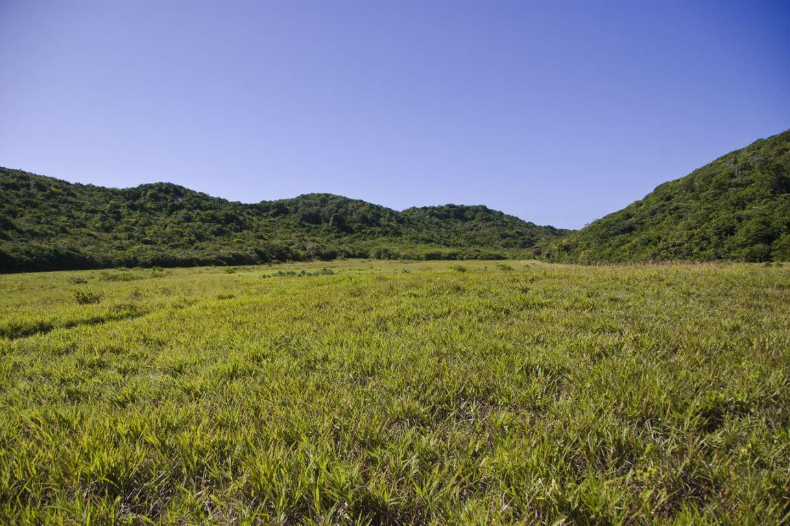 RPPN Mata da Estrela, no Rio Grande do Norte. Foto: Wikipédia.