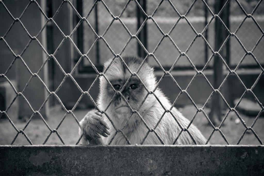 De acordo com o Ibama, o Zoo do Rio não cumpre não cumpre mais com seu papel de educação ambiental. Foto: Flavio Zagri/Flickr.
