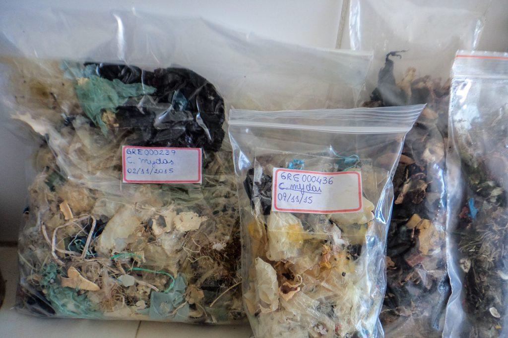Lixo encontrado nos estômagos de tartarugas surpreende. Foto: Instituto Gremar