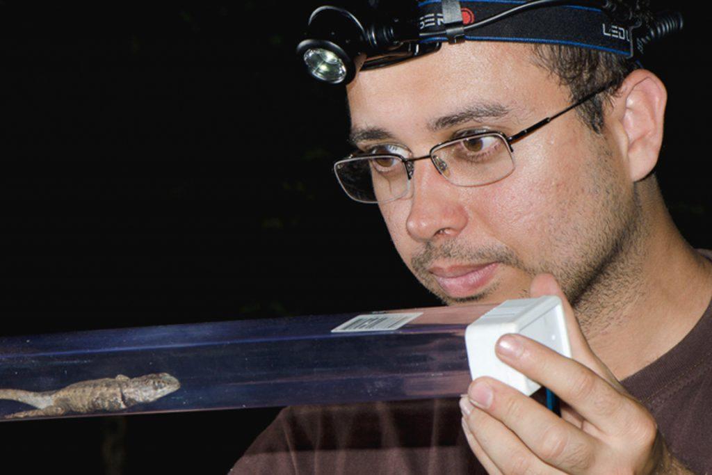 André Carvalho examina um exemplar recém capturado de Tropidurus na Serra do Arame, Ibotirama, Bahia. Durante a busca por exemplares da nova espécies os pesquisadores encontraram outras duas espécies, já descritas, do mesmo gênero. Foto: Pedro Peloso