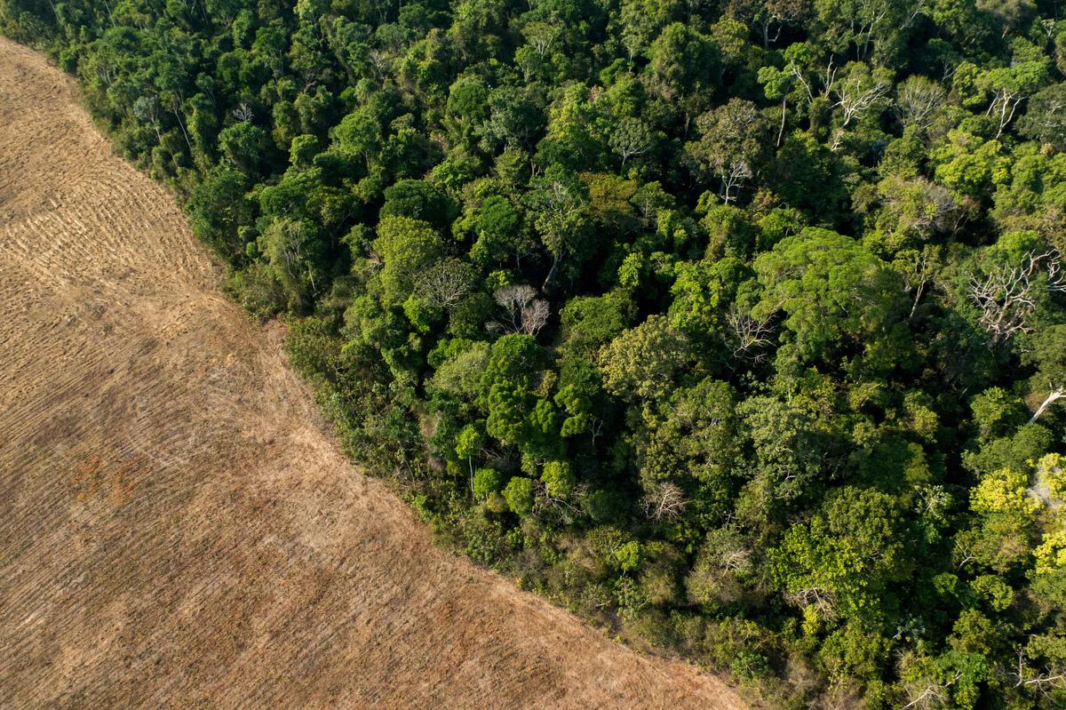 Área de plantio de soja no arredores de Santarém e Belterra.