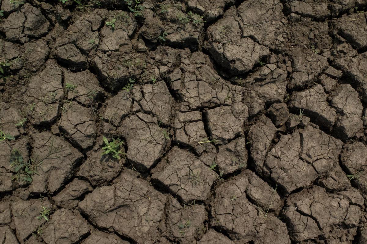 Região de várzea as margens do Rio Amazonas sofre com a estiagem.