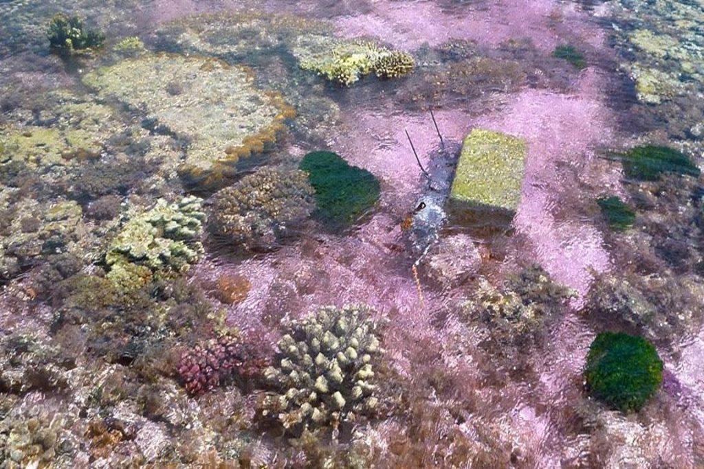 Platô coralino tingido durante experimento na Austrália. Foto: Ken Caldeira/Nature.