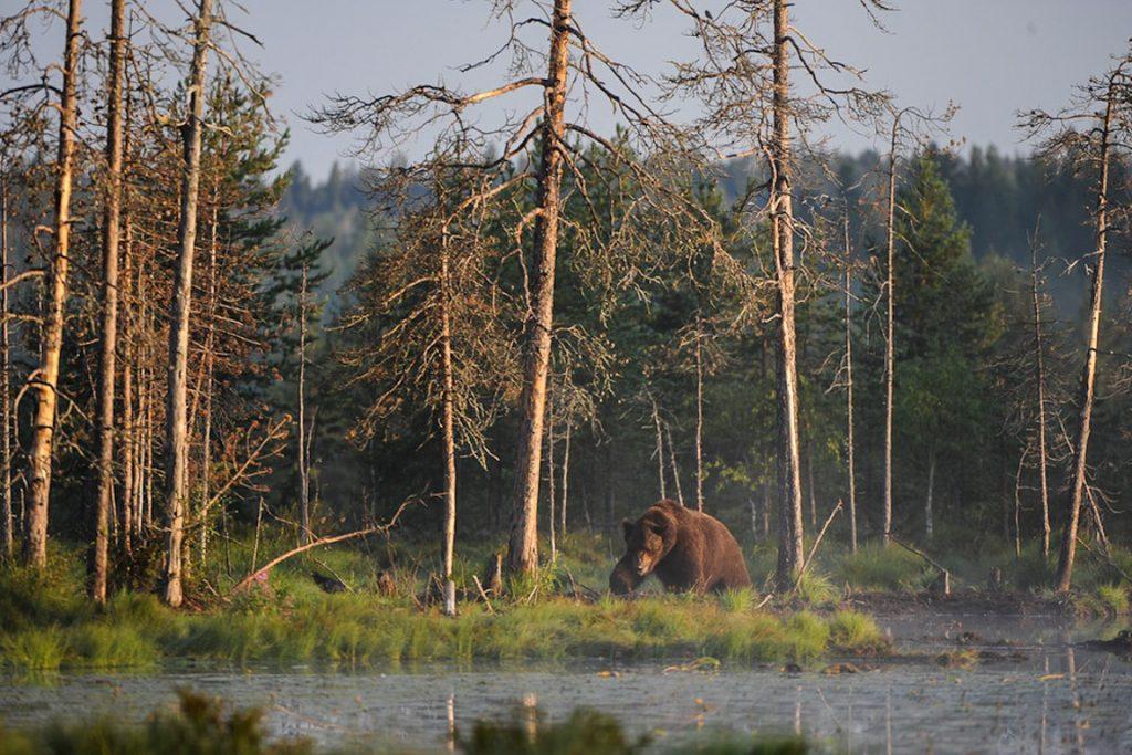 Foto: Joni-Pekka Luomala/Flickr