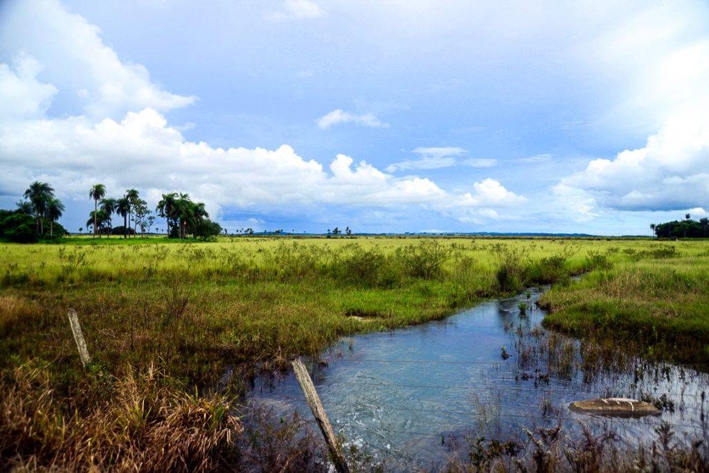 Alterações no fluxo de água de banhados podem afetar rios até sua foz. Foto: Fábio Pellegrini
