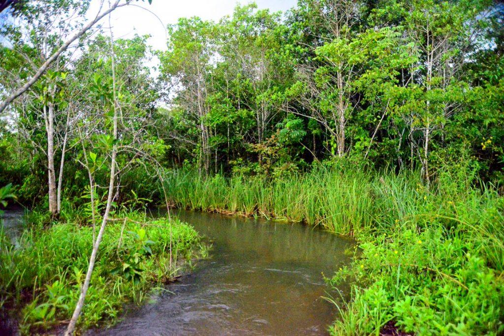 Área de banhado do rio Formoso tem várias chácaras de lazer às suas margens. Foto: Fabio Pellegrini