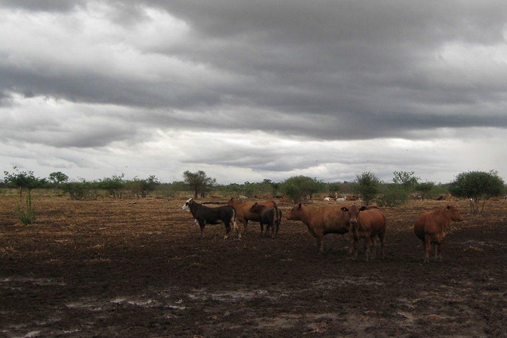 Fazenda de gado no Paraguai. Empresas agropecuárias preferem investir em áreas próximas e onde existem terras à disposição, mas rigor de leis e fiscalização ambiental influencia na tomada de decisão. Crédito: Cortesia Yann le Polain de Waroux.
