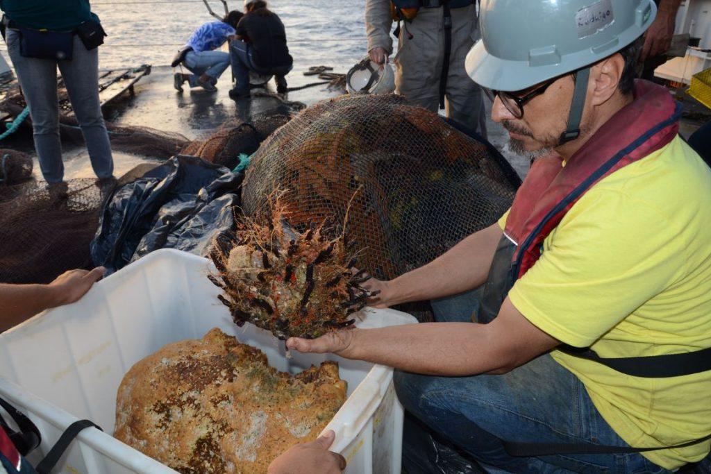 Material trazido do fundo do mal confirmam que existe um recife na costa amazônica. Foto: Fernando Moraes.