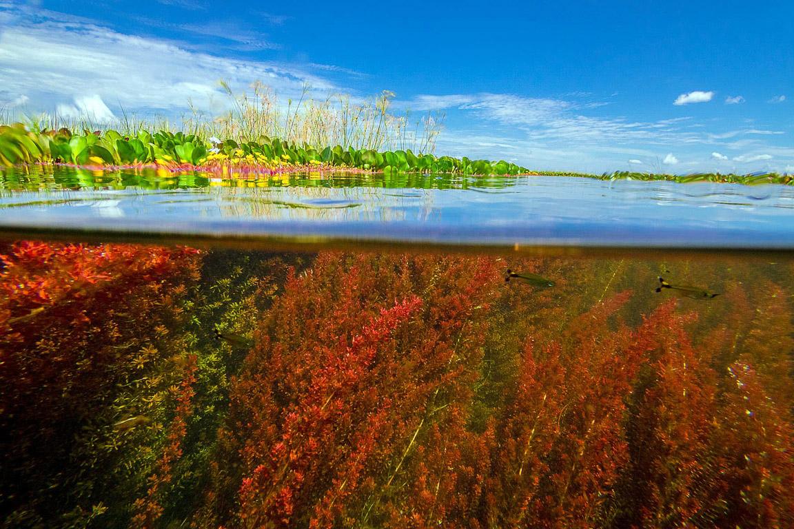 Pantanal submerso. Foto: Daniel De Granville