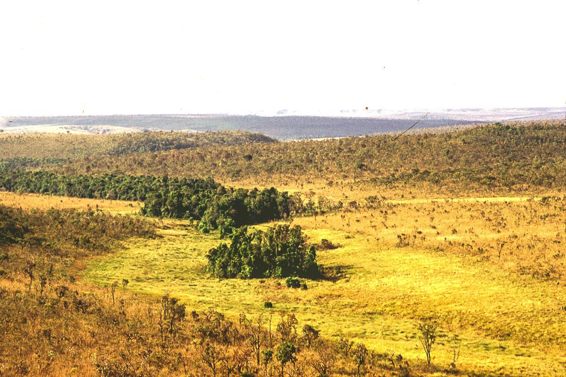 Variação de hábitats de Cerrado, em mirante do Parque Nacional das Emas, Goiás. Em primeiro plano, à esquerda, campo cerrado, no centro da imagem campo úmido circundando floresta de galeria (nascentes do córrego Avoador). Mais ao fundo cerrado sensu stricto. Esta variação de ambientes determina a distribuição local de Serpentes do Cerrado, com cada ambiente apresentando diferentes especies. Há, portanto, especies típicas da mata de galeria (<i>Bothrops moojeni</i>), espécies típicas de savanas campestres (campo sujo, campo cerrado), tais como <i>Bothrops itapetiningae</i>, e espécies típicas de campos úmidos, como por exemplo <i>Xenodon nattereri</i> e <i>Liophis maryellenae</i>.