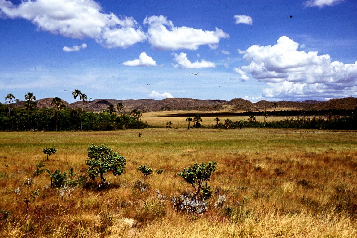Vista típica de hábitats de Cerrado. Chapada do Veadeiros, Goiás. Em primeiro plano campo sujo, seguido por campo úmido e vereda / mata de galeria. Foto: Cristiano de Campos Nogueira