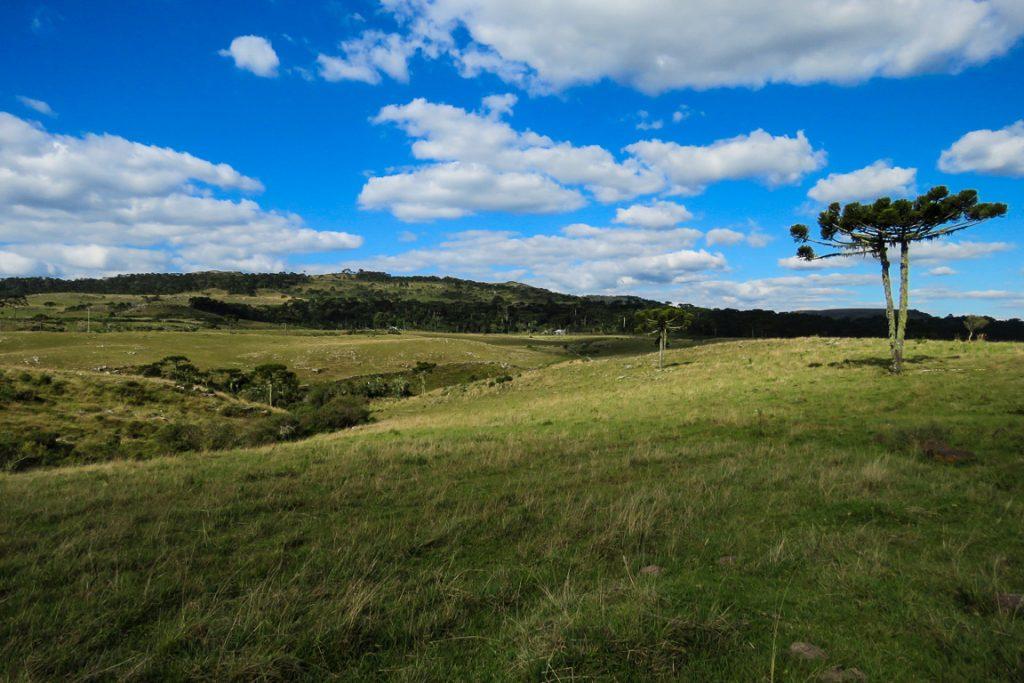Campos nativos são um dos ambientes dominantes da região... Foto: Rita Souza