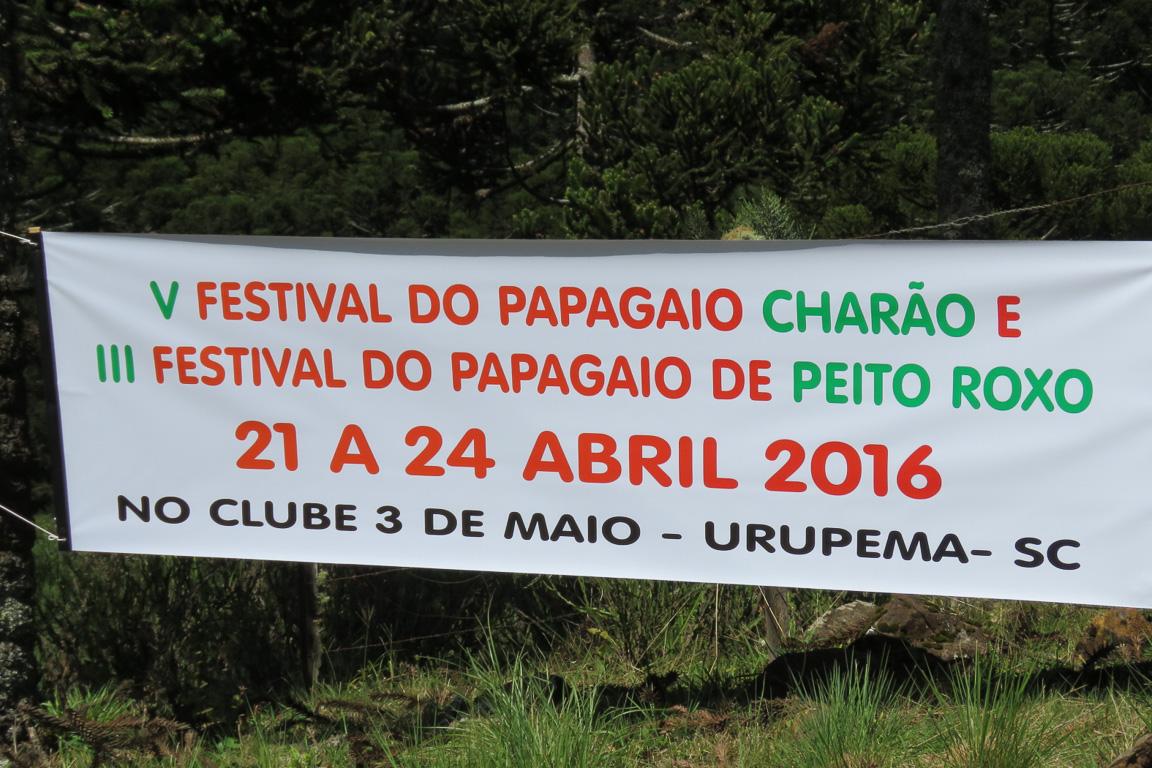 É tempo de Festival! Foto: Rita Souza