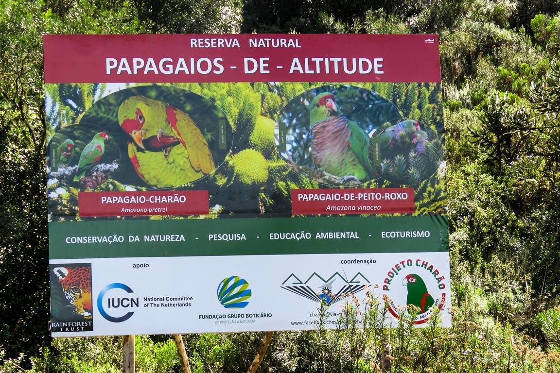 A RPPN Papagaios de Altitude, do Projeto Charão, é a mais nova iniciativa de conservação na região. Foto: Rita Souza