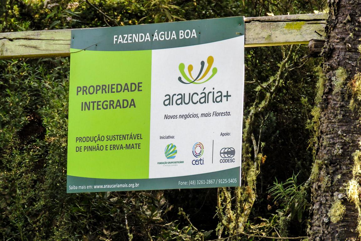 A conservação das Florestas com Araucária também passa pelo uso racional de seus recursos florestais, como nos projetos apoiados pelo programa Araucaria+ . Foto: Rita Souza