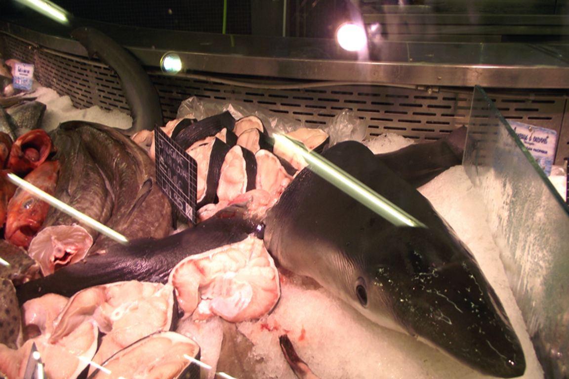 Mantida a proibição de pesca de peixes ameaçados no Rio Grande do Sul